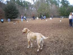 Off Leash Dog Park Apex Nc